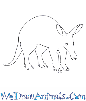 How to Draw an Aardvark in 10 Easy Steps