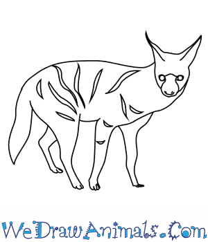 How to Draw an Aardwolf in 9 Easy Steps