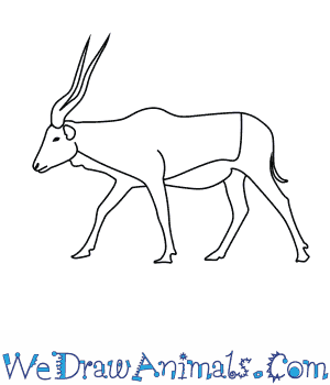 How to Draw an Addax in 6 Easy Steps