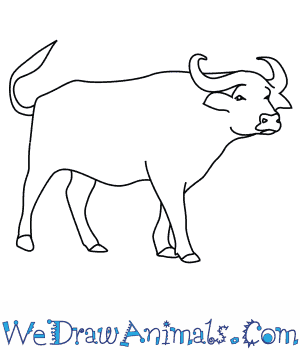 How to Draw an African Buffalo in 8 Easy Steps
