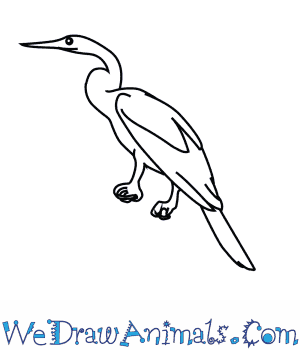 How to Draw an African Darter in 7 Easy Steps