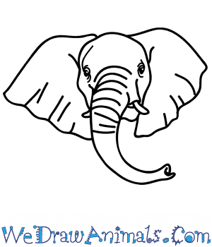 How to Draw an African Elephant Face in 5 Easy Steps