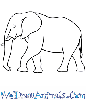 How to Draw an African Elephant in 8 Easy Steps