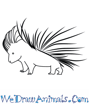 how to draw an african porcupine