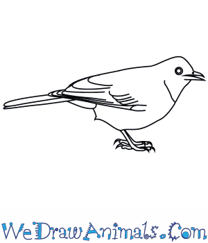 How to Draw an African Red Eyed Bulbul in 7 Easy Steps