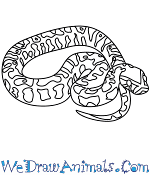 How to Draw an African Rock Python in 4 Easy Steps