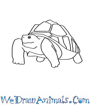 How to Draw an African Spurred Tortoise in 7 Easy Steps