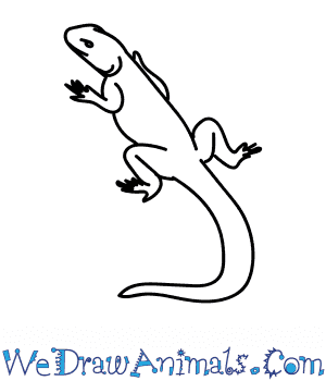 How to Draw an Agama in 6 Easy Steps