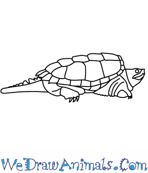 How to Draw an Alligator Snapping Turtle in 8 Easy Steps
