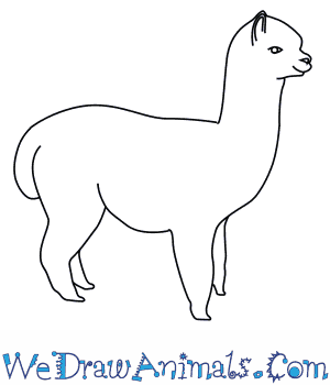 How to Draw an Alpaca in 8 Easy Steps