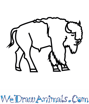 How to Draw an American Bison in 8 Easy Steps