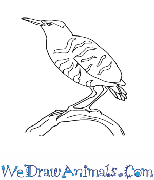 How to Draw an American Bittern in 8 Easy Steps