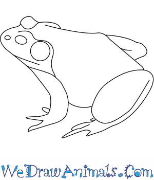 How to Draw an American Bullfrog in 5 Easy Steps