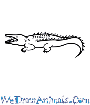 How to Draw an American Crocodile in 6 Easy Steps