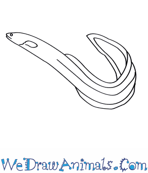 How to Draw an American Eel in 5 Easy Steps