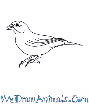 How to Draw an American Goldfinch in 6 Easy Steps