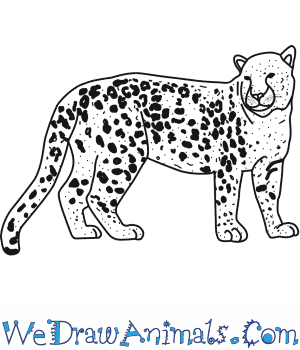 How to Draw an Amur Leopard in 9 Easy Steps