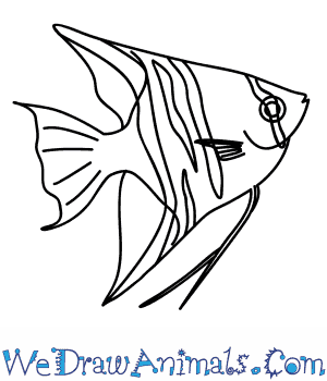 How to Draw an Angelfish in 9 Easy Steps