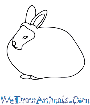 How to Draw an Angora Rabbit in 5 Easy Steps
