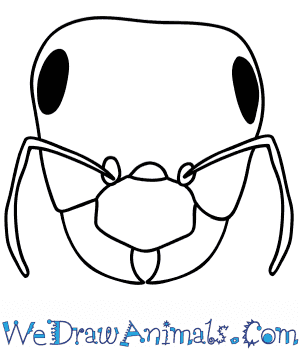 How to Draw an Ant Face in 6 Easy Steps