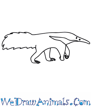 How to Draw an Anteater in 9 Easy Steps