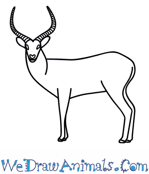 How to Draw an Antelope in 9 Easy Steps