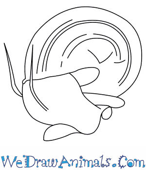 How to Draw an Apple Snail in 5 Easy Steps