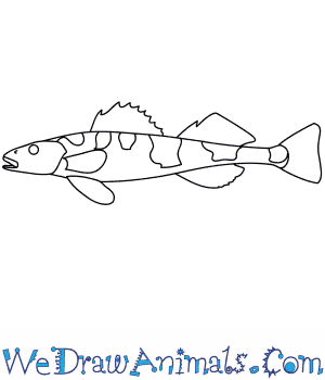 How to Draw an Apron in 8 Easy Steps