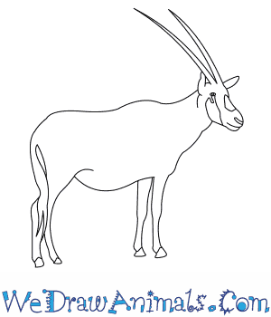 How to Draw an Arabian Oryx in 7 Easy Steps