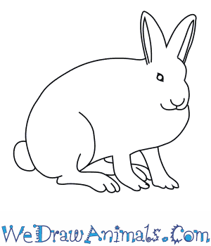 How to Draw an Arctic Hare in 8 Easy Steps