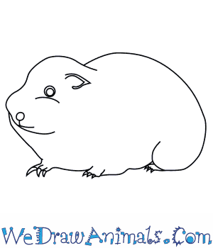 How to Draw an Arctic Lemming in 6 Easy Steps