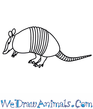 How to Draw an Armadillo in 9 Easy Steps