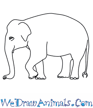 How to Draw an Asian Elephant in 8 Easy Steps