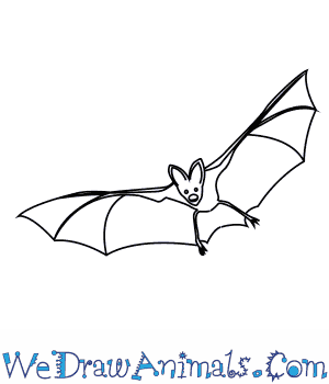 How to Draw an Asian False Vampire Bat in 7 Easy Steps