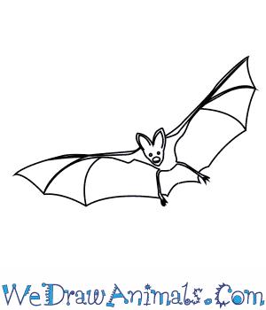 How To Draw An Asian False Vampire Bat