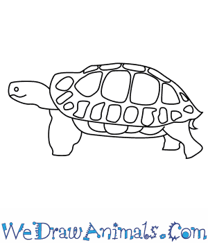How to Draw an Asian Forest Tortoise in 8 Easy Steps
