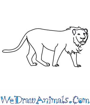 How To Draw An Asian Lion Lion outline free png stock. how to draw an asian lion