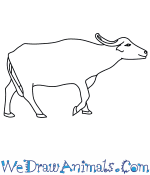 How to Draw an Asian Water Buffalo in 8 Easy Steps