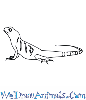 How to Draw an Asian Water Dragon in 8 Easy Steps