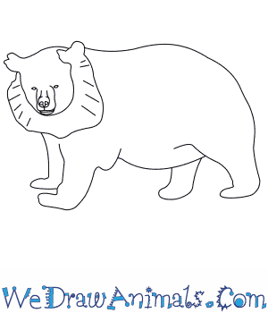 How to Draw an Asiatic Black Bear in 5 Easy Steps