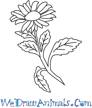 How to Draw an Aster Flower in 4 Easy Steps