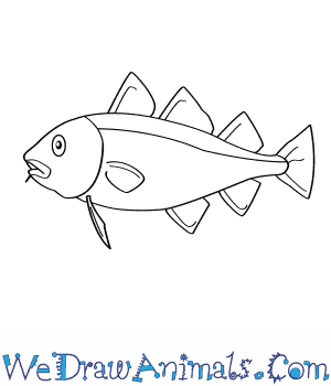 How to Draw an Atlantic Cod in 5 Easy Steps