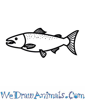 How to Draw an Atlantic Salmon in 6 Easy Steps
