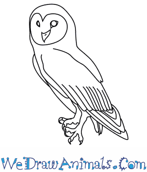 How to Draw an Australian Masked Owl in 7 Easy Steps