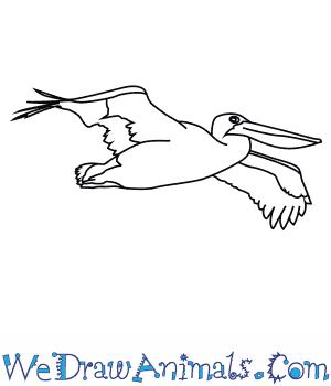 How To Draw An Australian Pelican