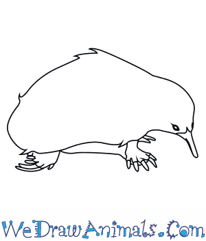 how to draw an australian spiny anteater