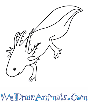 How to Draw an Axolotl in 9 Easy Steps