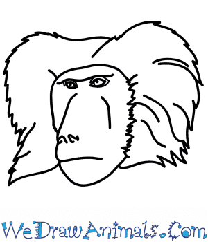 How to Draw a Baboon Face in 6 Easy Steps