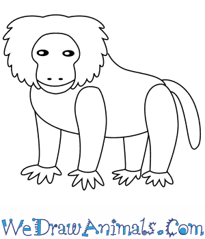 How to Draw a Baboon For Kids in 6 Easy Steps