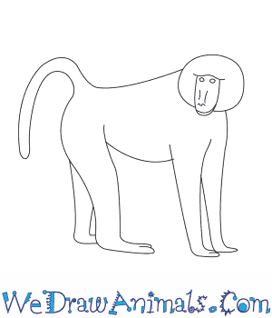 How to Draw a Baboon in 7 Easy Steps